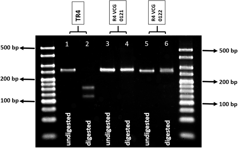 Molecular Diagnostics of Banana Fusarium Wilt Targeting Secreted-in-Xylem Genes.